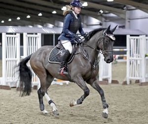 black, equestrian, and equine image