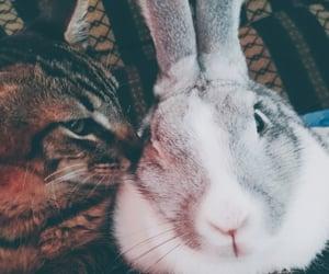 animal, bunny, and family image