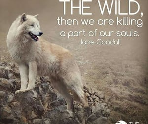 animals, quotes, and wolf image