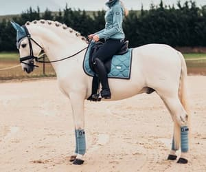 aesthetic, dressage, and rootd image