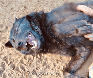 black, smile, and wolf image