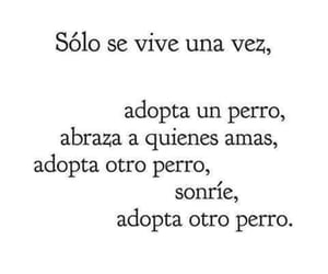 amor, perrito, and quotes image