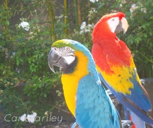 birds, parrots, and summer image