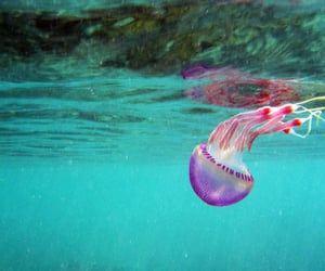 color, ocean, and jellyfish image
