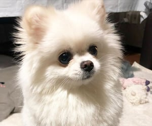 blanco, perro, and tierno image