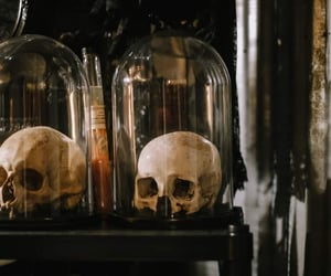 cloche, display, and macabre image