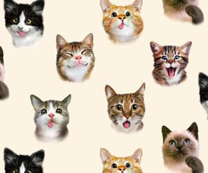 cats, kittens, and fabric supplies image
