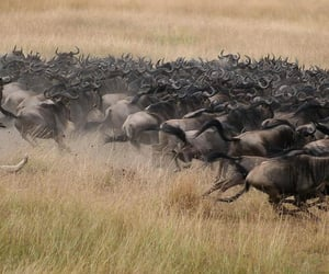 africa, travel, and east africa image