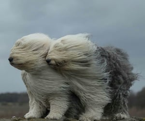 dog, dogs, and wind image