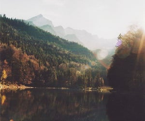 analog, forest, and photography image