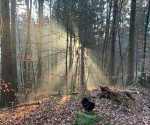 dog, magic, and trees image
