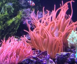 aesthetic, animals, and aquarium image