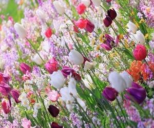 colors, printemps, and fleur image