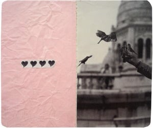 bird, pink, and Collage image