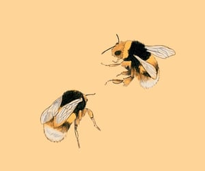 bee, animal, and art image