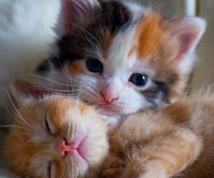 animals, cats, and puppies image