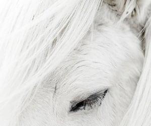 albino, blanco, and alto image