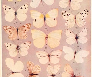 archive, butterfly, and theme image