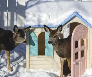 deer, winter, and cute image