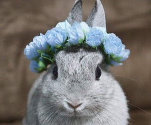 Animales, cute, and conejo image