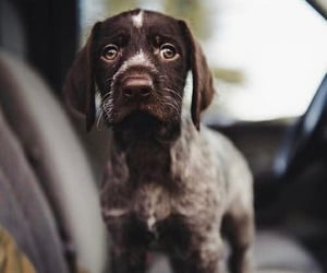 amazing, dog, and fluffy image