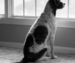 animals, black and white, and grayscale image