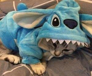 adorable, animals, and Animais image