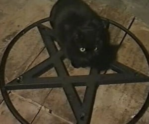 cat, black, and pentagram image