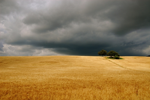 andalucia, clouds, and cornfield image