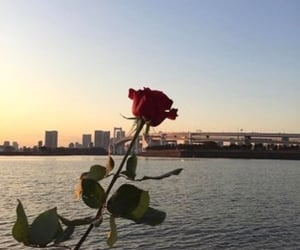 rose, city, and flower image