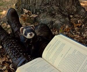 autumn, reading, and furry creaure image