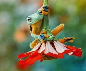 frog and nature image