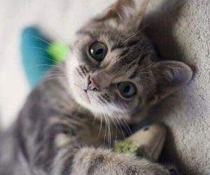 Soooo adoreble........🐾😍❤️❣️‼️