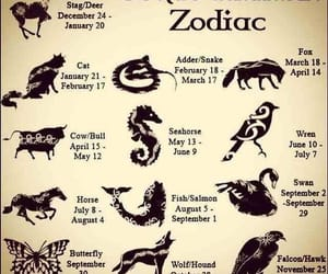 by birthdate, celtic animal zodiac, and your animal image