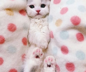 adorable, baby, and paws image