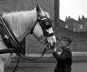 young boy and horse and so gentle image