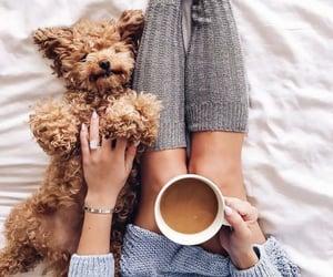 coffee bean, coffee cups, and coffee mug image