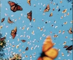 aesthetic, wallpaper, and butterflies image