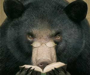 bear, book, and illustration image