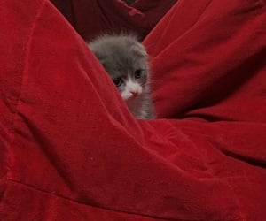 cat, red, and tiny image