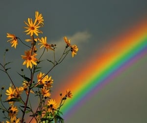 flowers, aesthetic, and rainbow image