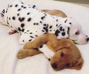 Animales, mascota, and love image