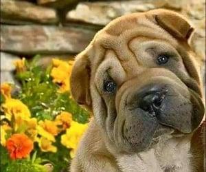 lindo, perro, and ternura image