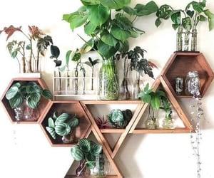 plants, inspiration, and interior image