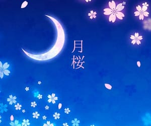 blue, night, and flowers image