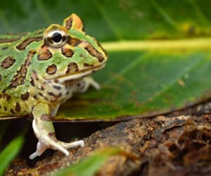 frog food, what do frogs eat, and what do tree frogs eat image