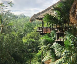 nature, tropical, and paradise image