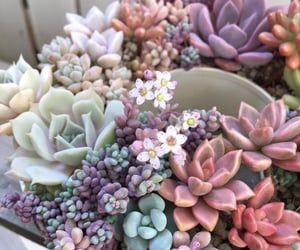 flowers, plants, and succulents image