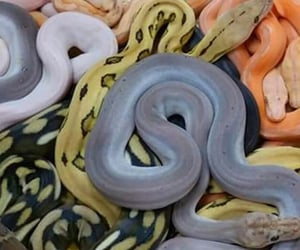 archive, feed, and snake image