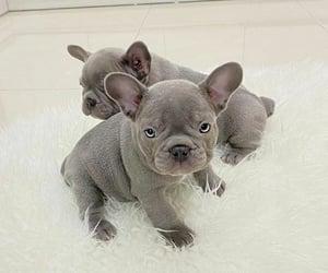 baby, dog, and doggie image